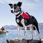 life jacket jpg