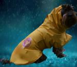 raining jpg